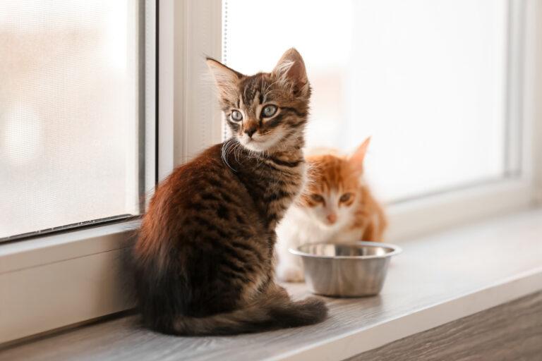Comida para gatos para todas las edades
