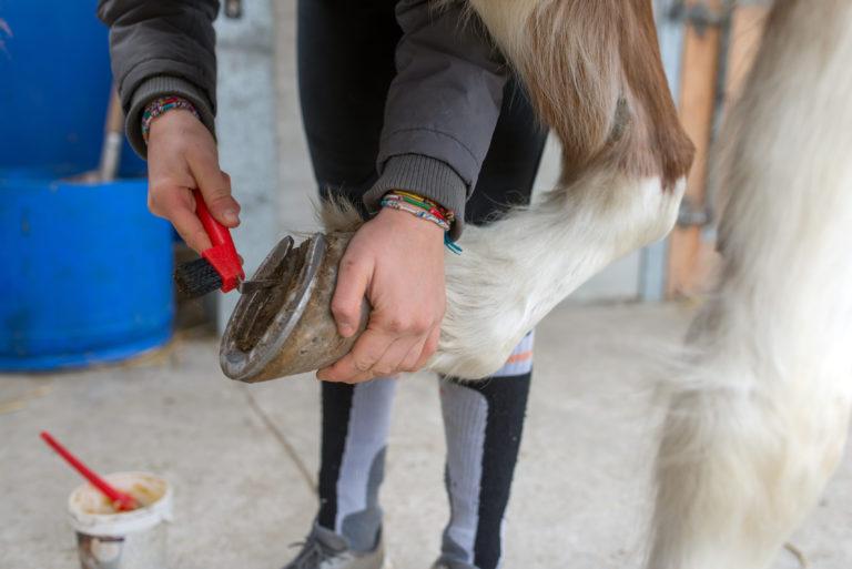 El cuidado de los cascos de los caballos