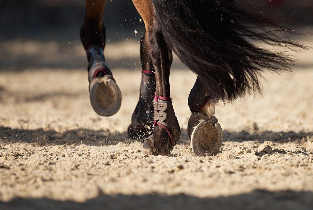 Enfermedades de los cascos de los caballos