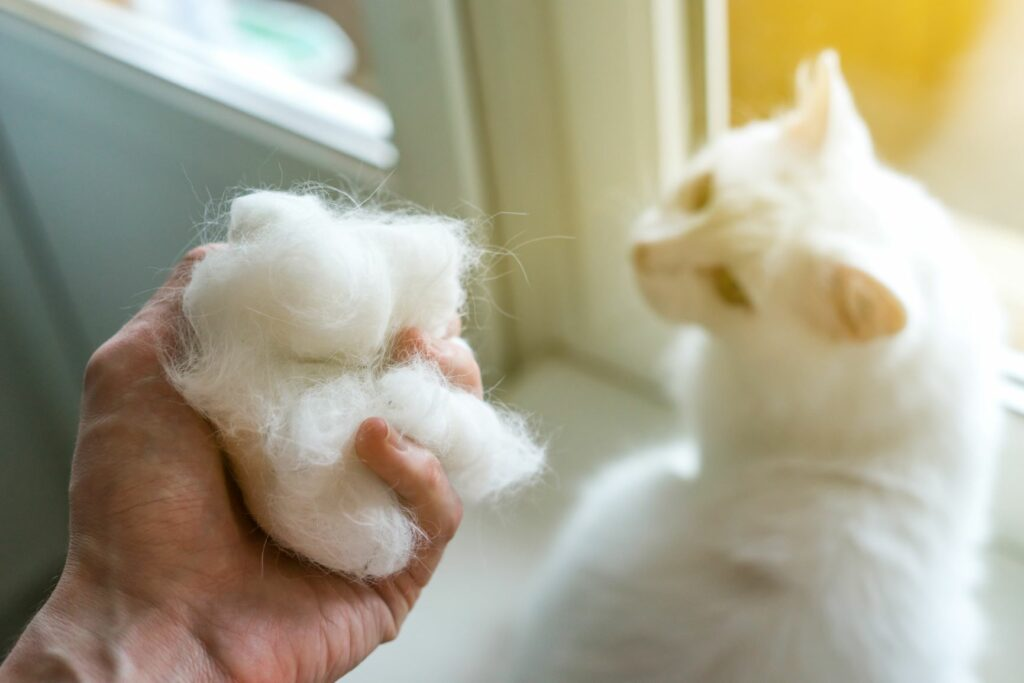 Eine Hand mit vielen Katzenhaaren und eine Katze sitzt im Hintergrund.