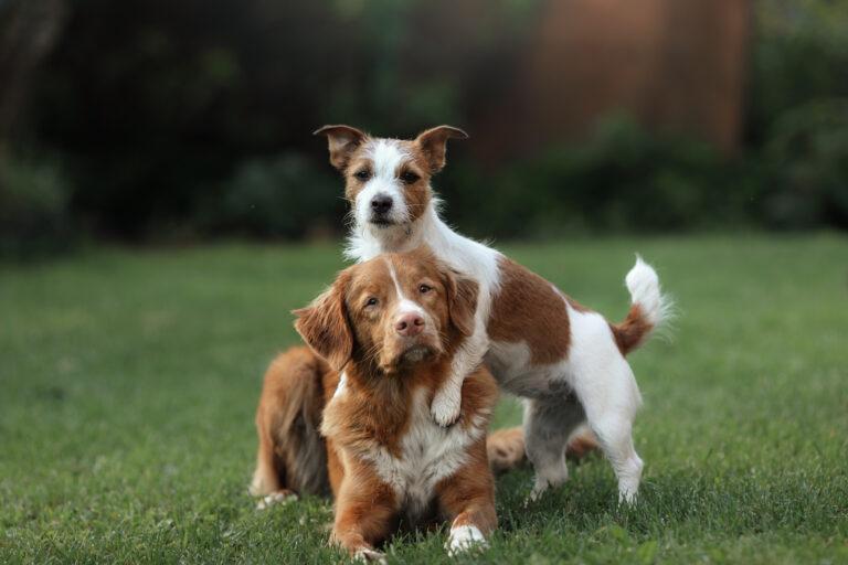 Educar perros de razas diferentes