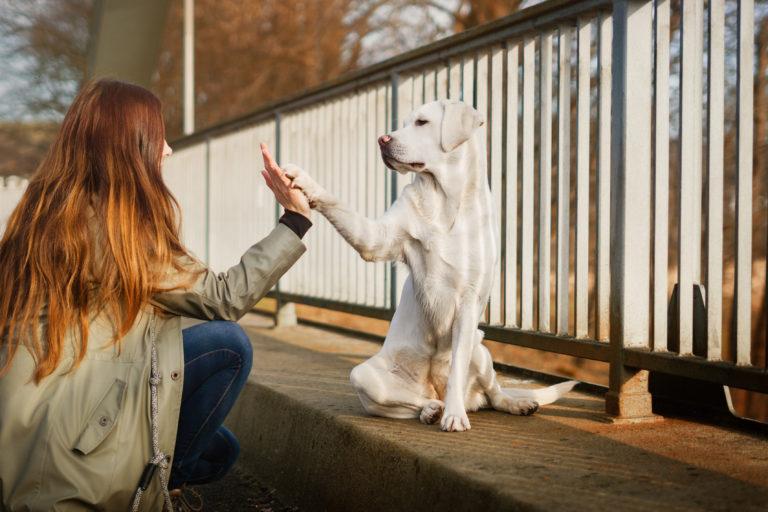 Cómo pasear a un perro sin correa