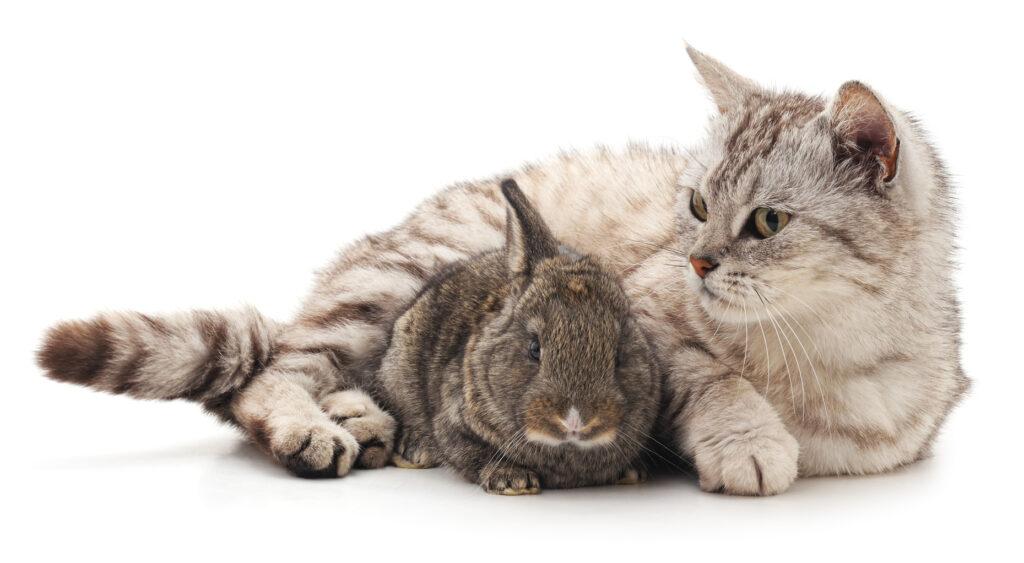 Gatos y roedores juntos
