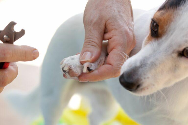 Cortar las uñas a un perro