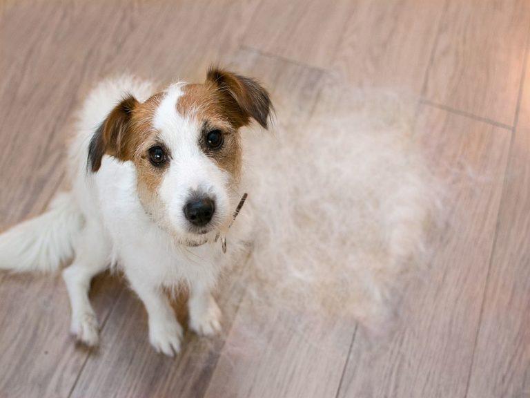 Caída del pelo en perros