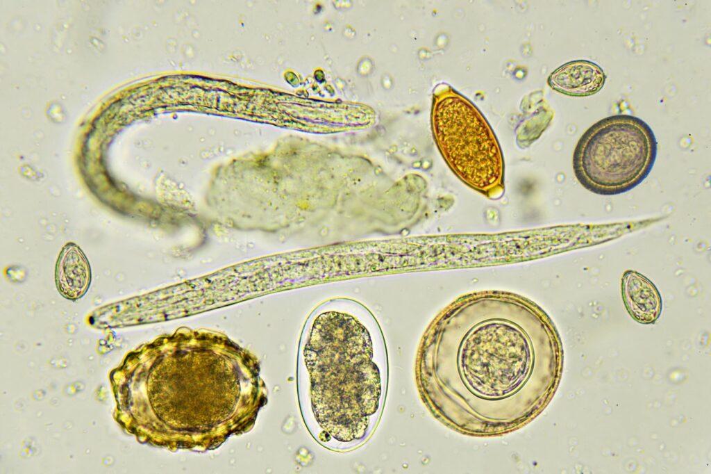 Verschiedene Wurmarten unter dem Mikroskop