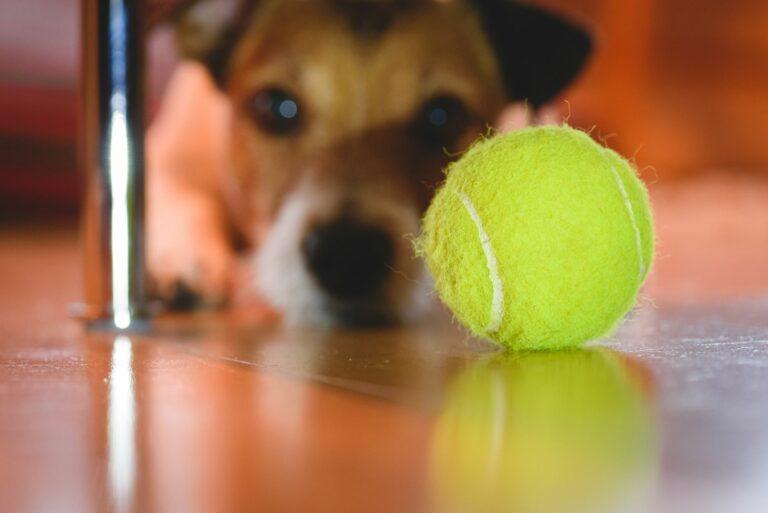 pelotas de tenis para perros