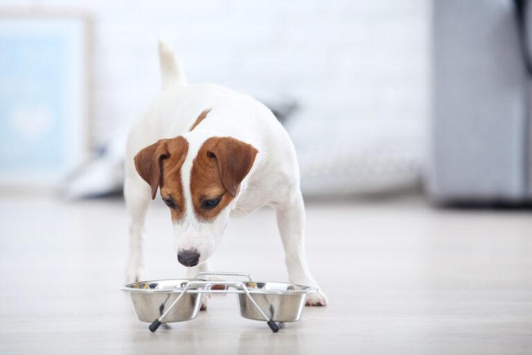 Cambio de alimentación en perros