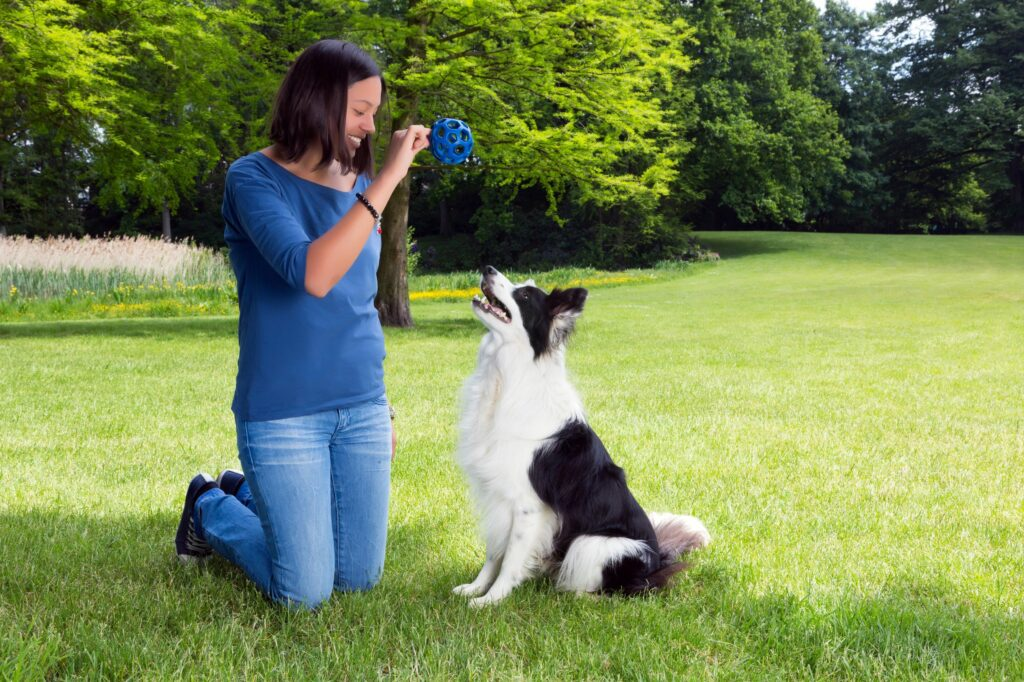 cómo enseñar a un perro a traer la pelota