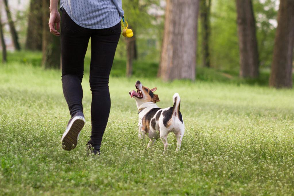 instinto de caza en perros