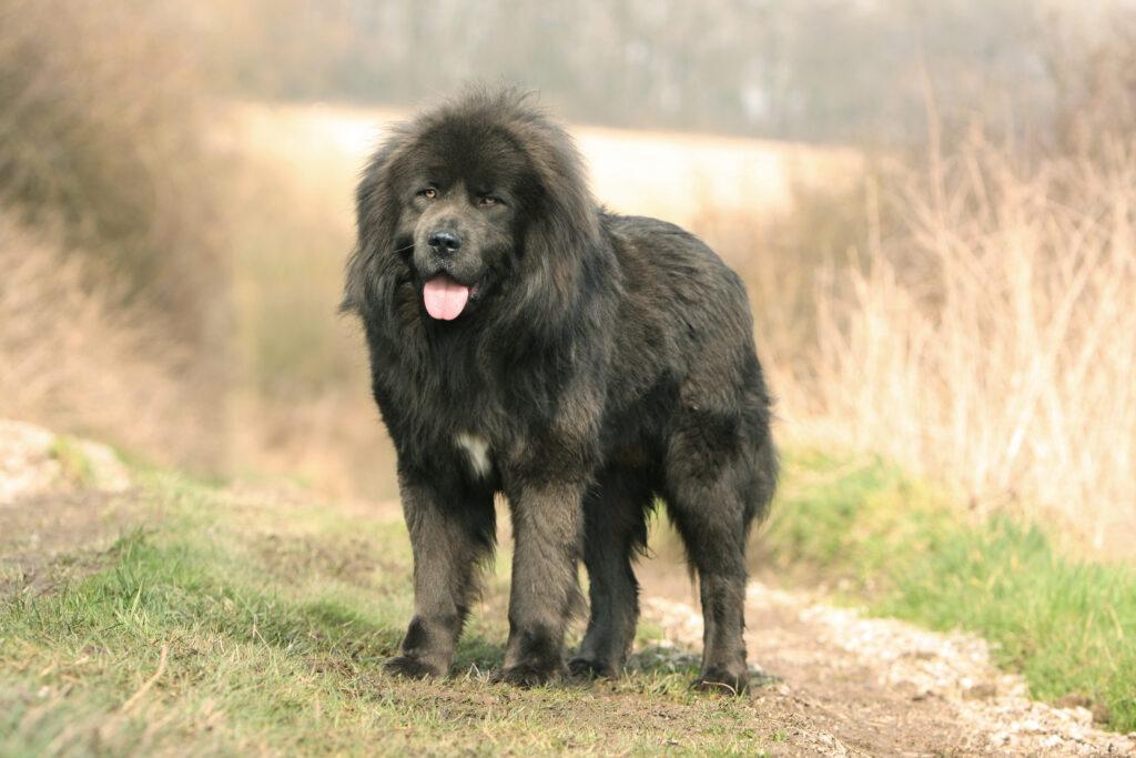 los perros más caros