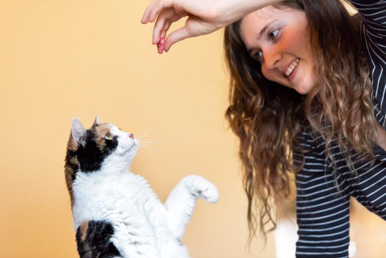 trucos para gatos