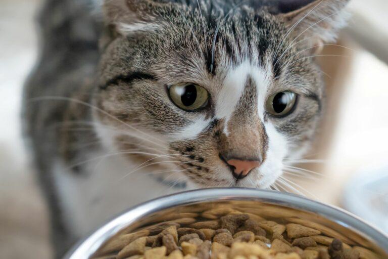Cantidad de comida para gatos