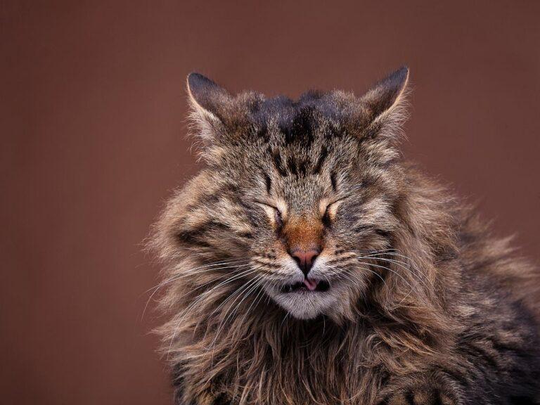 Estornudos en gatos