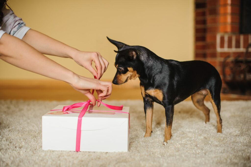 San Valentín para perros
