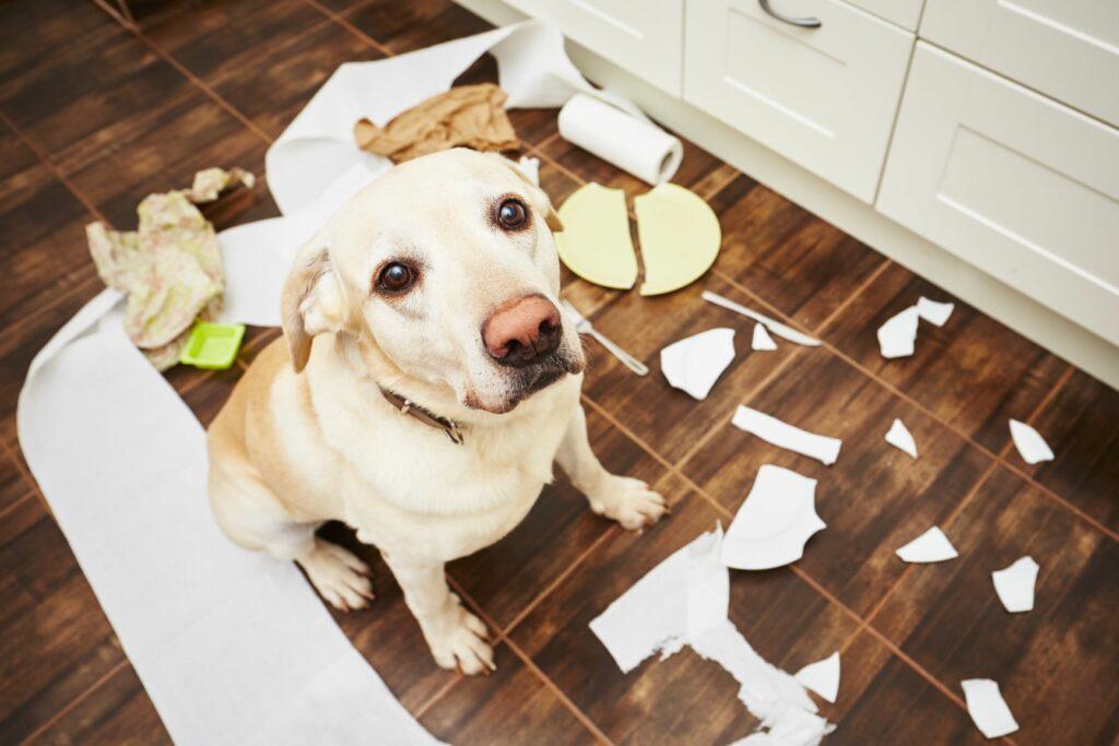 ansiedad por separación en perros