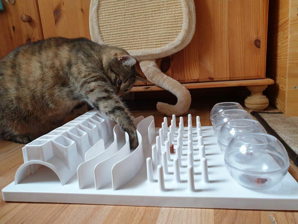 deporte para gatos