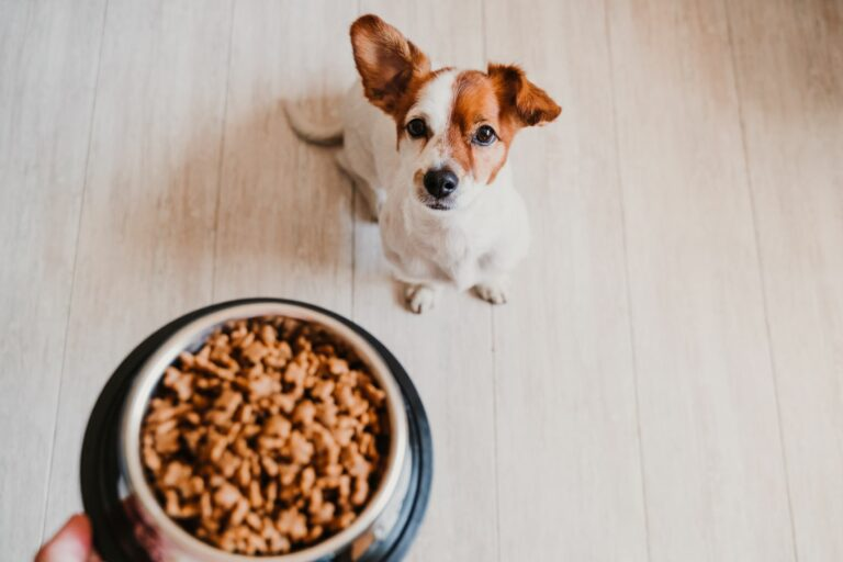 qué cantidad de comida debe comer un perro