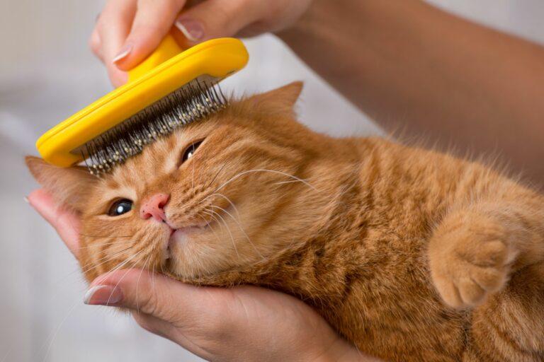 Cómo cuidar el pelaje de un gato