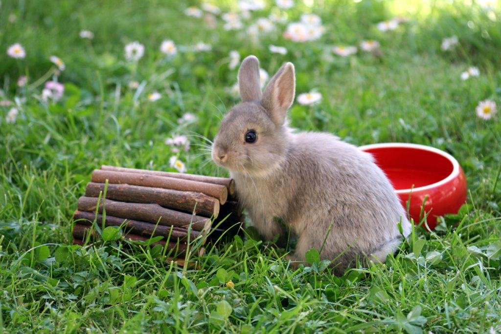 Coccidios en conejos