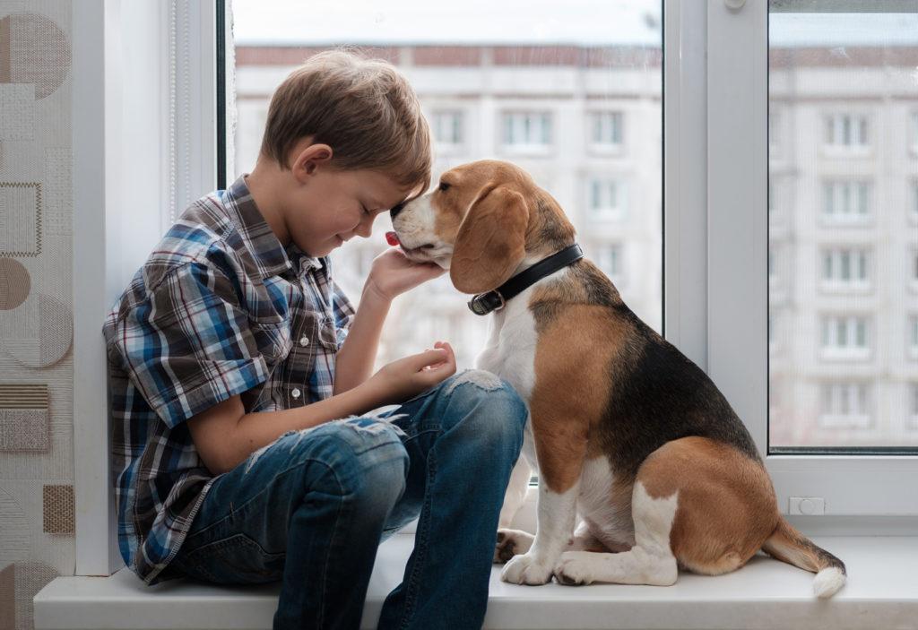 Cómo saber si tu perro te quiere