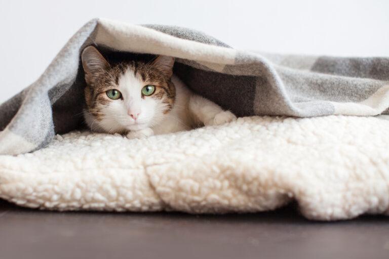 Resfriado en gatos