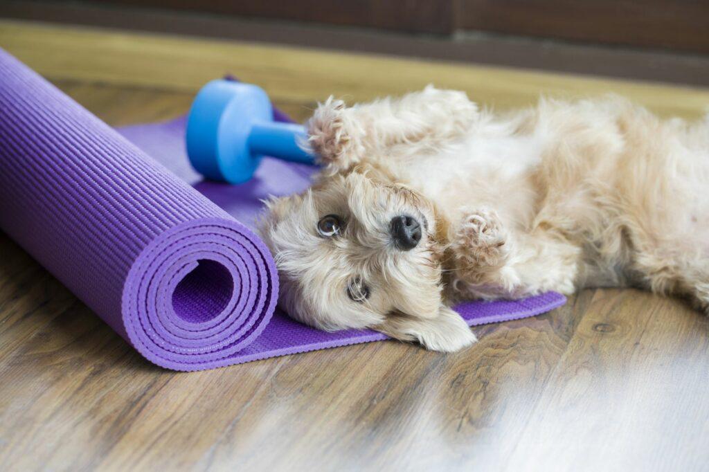 ejercicio para perros