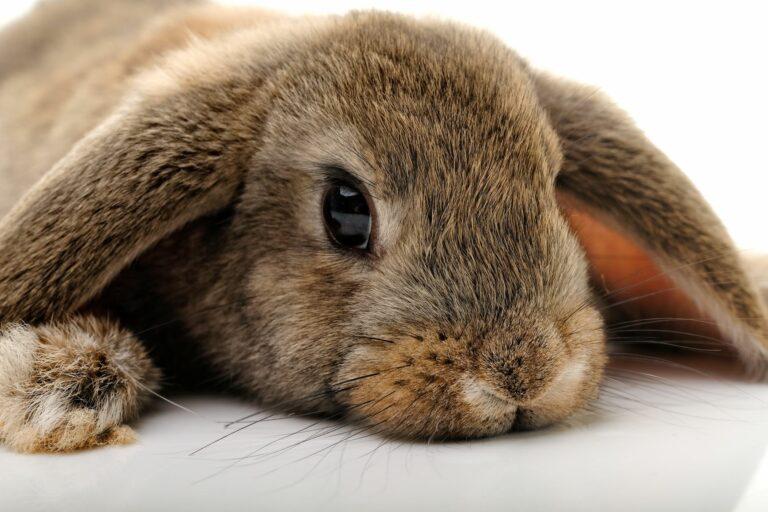 Ácaros en conejos
