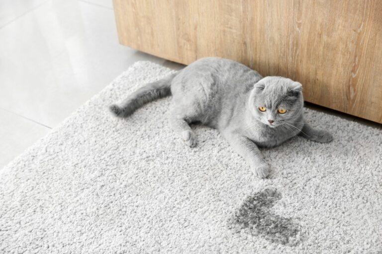 cómo quitar el olor a orina de gato