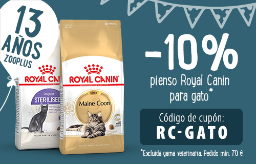 cumple RC gato