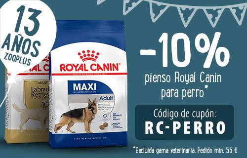 cumple RC perro