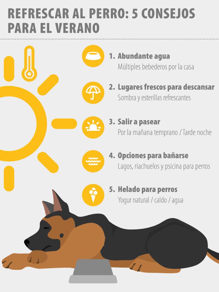 Refrescar al perro