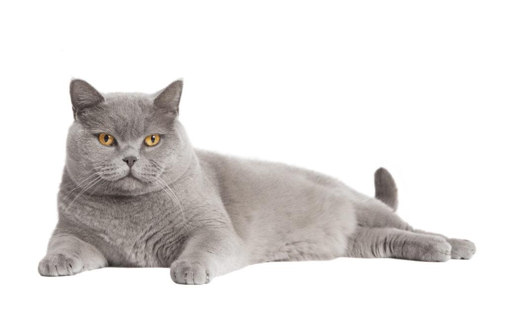 Adoptar un gato