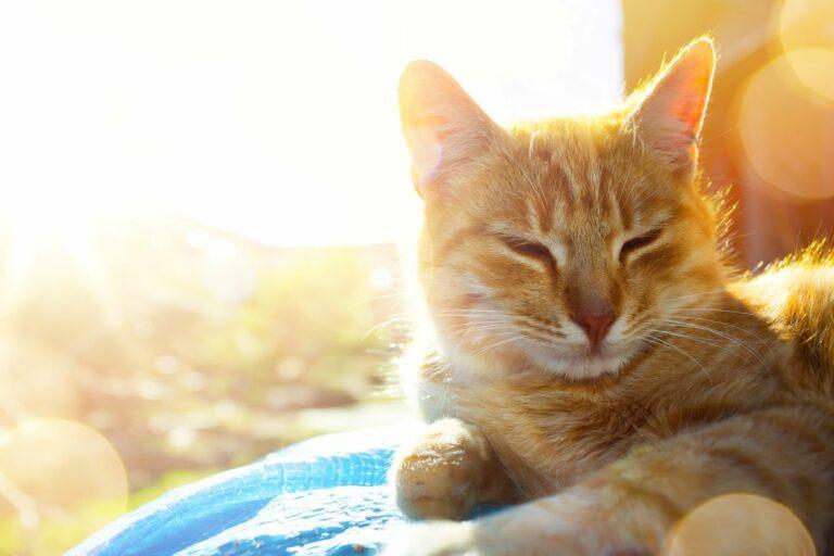 gato en verano