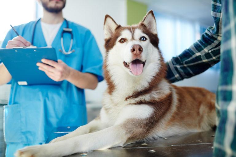 Enfermedades neurológicas en perros
