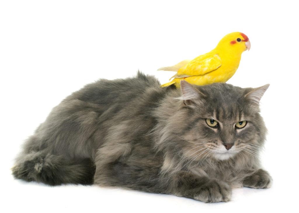 Gatos y pájaros juntos