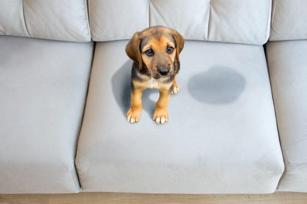 eliminar el olor a orina de perro