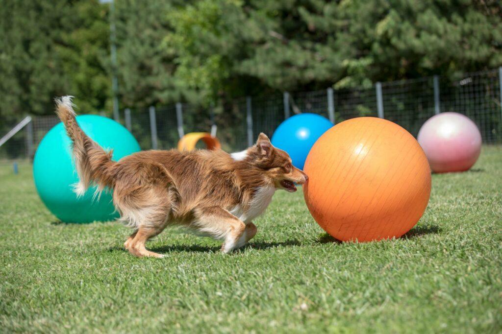 Treibball para perros