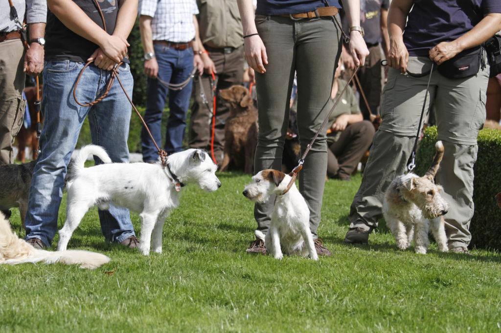 escuelas caninas