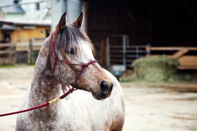 comprar un caballo