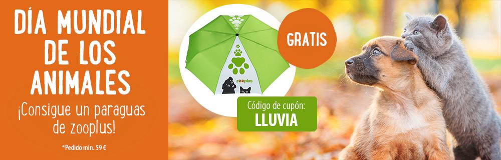 paraguas gratis
